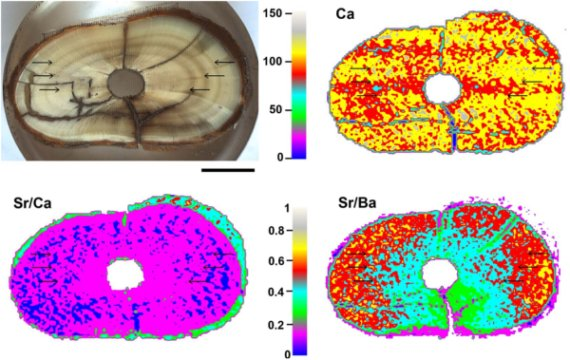 Laser-induced breakdown spectroscopy (LIBS) multi-elemental analysis of prehistoric animal teeth.