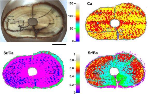 Laser-induced breakdown spectroscopy (LIBS) multi-elemental analysis of prehistoric animal teeth.